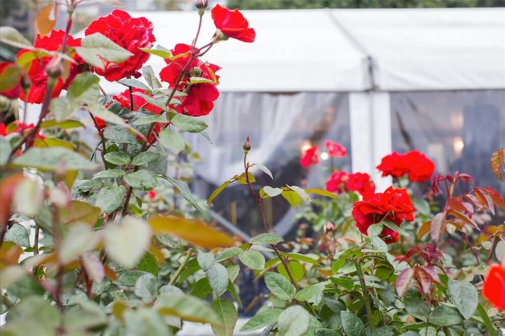 Botanic Gardens Rose Garden